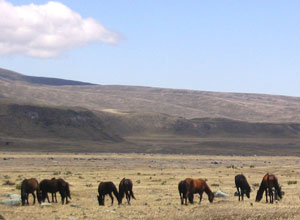 This area is home to herds of wild horses
