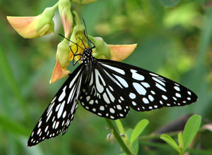 Visit the butterfly garden at Marati