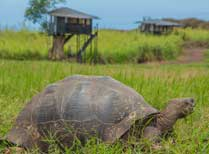 Description and photos of IsaMar on Isabela in the Galapagos islands, from award-winning Tribes Tailor made travel Tented Camp