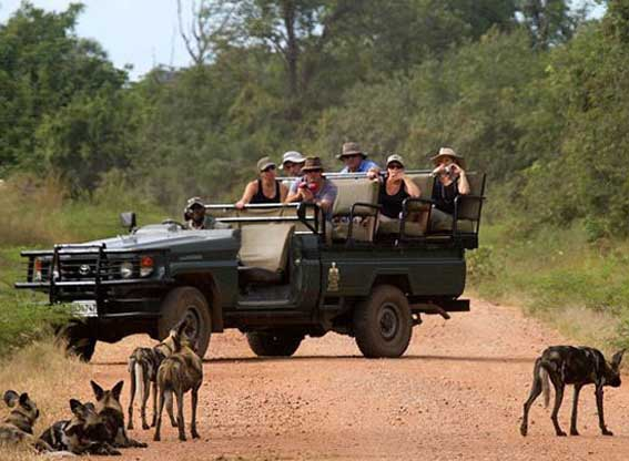 Wild Dogs Safari Tribes Travel