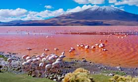 Flamingos at Laguna Colorado