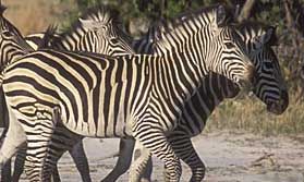 Northern Highlights with Letaka Safaris