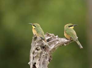 Excellent birding in the Okavango Delta