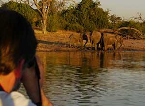 Elephants on Chobe river cruise, Botswana