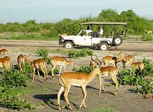 Game viewing in Chobe