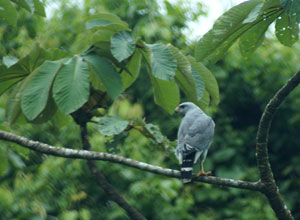 Watch birds on a rainforest walk in Arenal