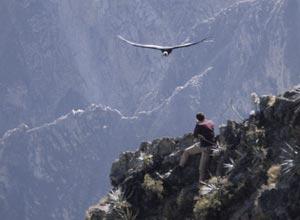Flight of the condor colca canyon