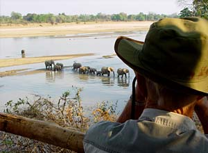 From the elephant hide in South Luangwa, Zambia