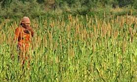 Bishnoi woman, Rajasthan
