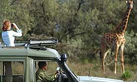 Safari Royale in Kenya