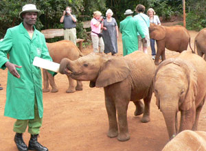 Daphne Sheldricks Elephant Orphanage