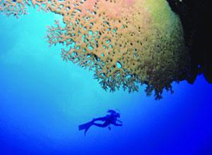 Go diving while at Tekoma