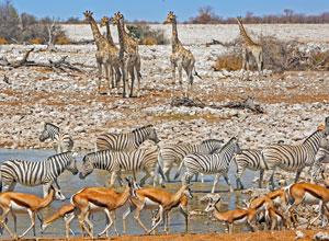 Wildlife at an Etosha waterhole