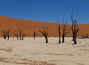 Deadvlei Namib Naukluft National Park