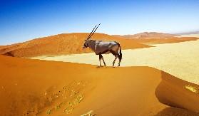 Namibia Glamping Adventure