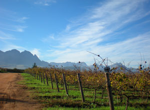 Visit the picturesque Winelands
