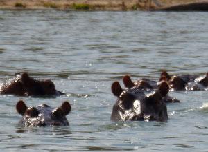 Hopps at Lake Tagalala in Selous