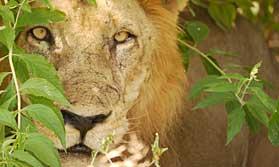 Tanzania budget safari holiday