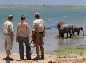 Walking safari at Mana Pools